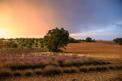 Plateau de Valensole (bautisterias) Tags: provence provenza france francia summer provençal southoffrance midi プロヴァンス 花 fields valensole plateaudevalensole fontaines d750 storm light sunset rain thunderstorm colours color country ruralfrance rural house field isolated alone dusk evening nikon abandoned wheat golden gold yellow orange sky weather ruins ruin