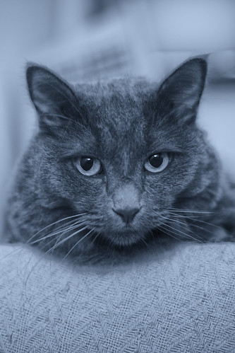The blue cat, for sure this time -[ Happy Caturday ]-