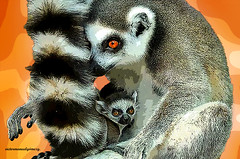 TAIL OF THE MOTHER LEMUR. (Viktor Manuel 990.) Tags: lemur lémur tail cola mother madre digitalart artedigital querétaro méxico victormanuelgómezg