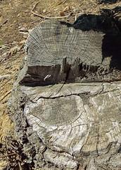 DSCF2312 (AliaGrafica) Tags: trees alberi albero naura nature countrside campagna macro wood woods