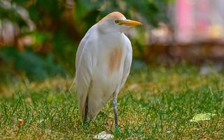 White Bird - 5691