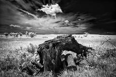 Kansas Grasslands (Jon Dickson Photography) Tags: ks kansas infrared tallgrass monument blackwhite prarie ngc