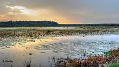 Rainy Day Waterscape - Sunset (Suzanham) Tags: waterscape sunset wetlands lilypads grass water sky noxubeewildliferefuge mississippi nature light