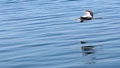 Lake Seneca 05_29_18_08 (Milt d:-)) Tags: lake seneca