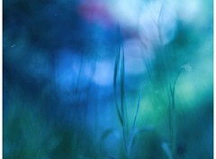 fall of the empire (_elusive_mind_) Tags: green blue greenblue gras bokeh minimalism stillleben plants