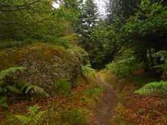 DSCN5575 (norwin_galdiar) Tags: bretagne brittany breizh finistere monts darrée nature landscape paysage