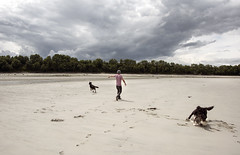 get it (tesseract33) Tags: tesseract33 peterlangphotographynet nikon light world art travel comox sky d750 nikond750 peterlang comoxphotographer outdoor beach beaches dog dogs clouds kyebay