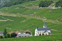Vignoble de Jongieux ( 73 ) (Monde-Auto Passion Photos) Tags: paysage landscape vue panorama vigne vignoble église france jongieux alpes savoie