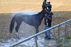 2018-08-04 (28) r9 #1 Shecor - 4th (JLeeFleenor) Tags: photos photography md maryland marylandracing marylandhorseracing laurelpark horses thoroughbreds equine equestrian cheval cavalo cavallo cavall caballo pferd paard perd hevonen hest hestur cal kon konj beygir capall ceffyl cuddy yarraman faras alogo soos kuda uma pfeerd koin حصان кон 马 häst άλογο סוס घोड़ा 馬 koń лошадь outside outdoors