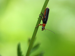 P6170355 (Oleg1961) Tags: olympus zuiko 50200mm f2835 edec20 summer birds insects butterflies flora