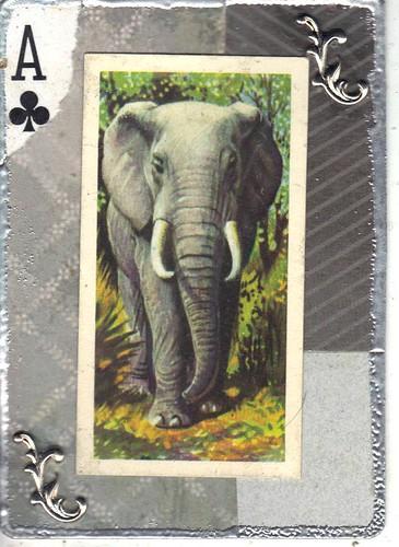 Elephant apc