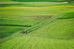 Field of Arts (little_stephy0925) Tags: qinghai china traveltotibet tibet farmers crops fieldsofcrops cuttinggrass fujifilm fuji fujifilmxt2 fujixt2 xt2 fujinonxf50140mm xf50140mm classicchrome mirrorlesscamera explorechina beautifulchina leadinglines patterns