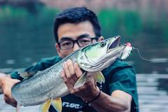 my friend nignyu caught yellow cheek carp (photogonia) Tags: ningyu flyfishing fly fishing lurefishing lure pesca fish tip catch carp yellowcheek xiangxi hunan huaihua cina china bait baitfishing 鳡魚