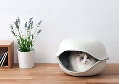 Stylish Cat Bed (priorityoftrust) Tags: furniture cat catlikemammal small sitting vase room bowl catsupply product indoor pot living wood clothing wooden white smalltomediumsizedcats table flora hat noperson flower jar flowerpot plant leaf pottedplant stilllife pottery nature indoors black holding hardhat desktop helmet cap one face standing