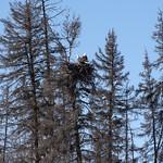 2 Eagle Nest KR 960 thumbnail