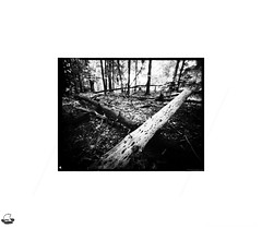 Pinhole Photography: Crossed Logs (LUW_0017) (masinka) Tags: woods forest etbtsy trees logs crossed ground chaos nature outdoors hiking pinhole analog photography landscape orchardpark chestnutridge park buffalo ny newyork bw blackandwhite