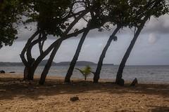 (fabhuleux) Tags: 6d canon france antilles martinique sea water sun beach nature street