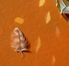 Tiny Gift from The Bird Tribe (Rain Love AMR) Tags: feather brown white tiny small macro orange angel globe mosaic tile reflection