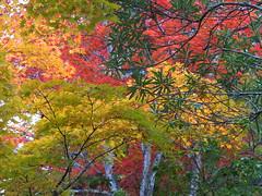 a (51) (hiromi89) Tags: japan beauty beautiful scenery flower wood pond