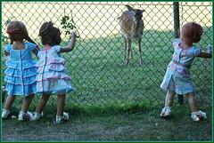 Kindergartenkinder ... oh, es kommt so nah an den Zaun ... (Kindergartenkinder 2018) Tags: havixbeck burg hülshoff kindergartenkinder annette himstedt dolls milina sanrike tivi tier reh rotwild