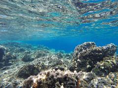 Undersea exploration... (Κώστας Καϊσίδης) Tags: undersea sea underwater chania crete mediterranean greece hellas visitgreece gopro underseascape underseaexploration undersealife