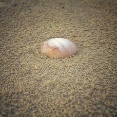 (yosmama151) Tags: texas galvestonisland galveston gulfofmexico gulfcoast seashore shoreline shore beach sand shell