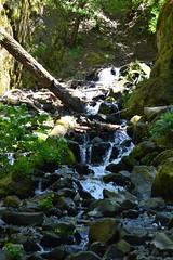 Starvation Creek (Jess (on a plane)) Tags: day10 starvationcreek waterfall landscape nature oregon usa roadtrip holiday 2018