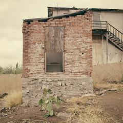 PRICKLY PEAR HOUSE (Jeff D Welker) Tags: pricklypearhouse abandoned arizona globe hasselblad501cm kodakportra160 newtopographics opuntia pricklypearcactus zeissdistagon60mmf35tcflens