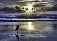 Birds like sunrise also (wnmorrow4) Tags: sunrise bird ocean beach sky sand