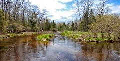 Northern Michigan River (Steve InMichigan) Tags: river michigan trees landscape panasoniclumixdmcfz70 riverview michiganriver