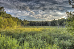 Sundown Over The Marsh (Pearce Levrais Photography) Tags: picoftheday photooftheday canon hdr explore nh newhampshire nature outdoor outside sky cloud marsh reed swamp landscape scenery sunset summertime sundown shadow