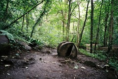 Tar barrels in Nightingale Valley (knautia) Tags: nightingalevalley brislington bristol england uk july 2018 film ishootfilm olympus xa2 olympusxa2 nxa2roll51 withtrapac woods footpath barrel tar fuji superia 400iso