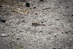 Bird Sanctuary (Zorro1968) Tags: georgecreifelmigratorybirdsanctuary britishcolumbia birds canada explorebc explorecanada insidevancouver myportcity nature outdoor photos604 photography sony vancouver vancouverisawesome wildlife waterfowl