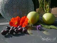 still life (2) (skistar64) Tags: stillleben stilllife garten garden sommer summertime daham pisweg kärnten carinthia