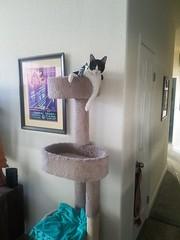 20180711_073241 (sobca) Tags: cat kottur kitte eesa miu kat pussi kato chat katze popoki gatto chatool billi felis cattus gato katt meo кошка बिल्ली 猫 γάτα vighro ᏪᏌחתול