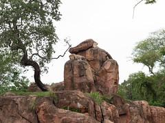 1608 Disney's Animal Kingdom63 (nooccar) Tags: 1806 animalkingdom devonadams devoncadams devonchristopheradams disney disneyworld disneysanimalkingdom june june2018 devoncadamscom devoncadamsgmailcom