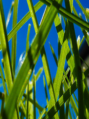 Green Grass and a Blue Sky (Steve Taylor (Photography)) Tags: green closeup macro newzealand nz southisland canterbury christchurch northnewbrighton grass lawn autumn sky sunny