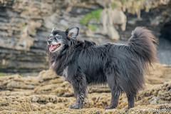 DSC00603 (Battomogli) Tags: perro dog blacky sony a6300