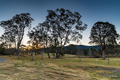 Out in the Country (Merrillie) Tags: landscape sunset gumtree australia rural hill newsouthwales dusk countryside country scenery tree cows acreage gresford farm twilight trees property