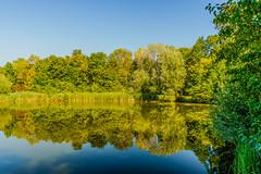 reflections (a7m2) Tags: nationalpark hainburg schwechat donauauen danube loweraustria natur wandern spazieren radfahren fauna flora