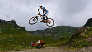 cow biker