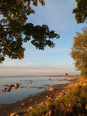 Sunset. The Gulf of Finland. (presteza777) Tags: thegulfoffinland sea coast sun sunset summer tramonto puestadelsol coucherdusoleil trees