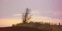Ploughed! (Elisafox22) Tags: elisafox22 sony nex6 55210mmtelephotolens 55210mm telephoto lens hff fencefriday fence fenceposts grass field ploughed fencedfriday sky clouds tree bare december winter sunrise morning landscape outdoors elisaliddell©2018