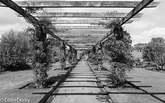 Kew Gardens  -19.jpg (Colin Dorey) Tags: path sky shadow kew gardens park botanicgardens richmond surrey london uk summer 2018 architecture structure trees bw monochrome blackandwhite blackwhite