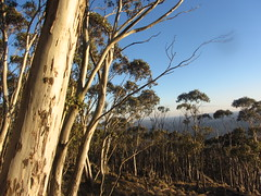 Views from Mt Macedon, Victoria (d.kevan) Tags: trees plants grasses rocks woods parksandgardens australia victoria mtmacedon mtmacedonregionalpark trunks branches