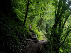 Forest path. Caucasus (vorotnik1) Tags: path forest stairs trees light lighting green caucasus
