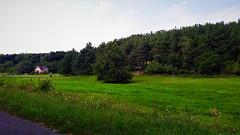 Nyár a fenyvesek árnyékában (Apátistvánfalva) (milankalman) Tags: summer green countryside