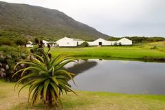 Ferme Autruche (-LoraN-) Tags: ferme autruche afrique sud south africa voyage élevage paysage vert