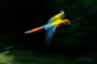 A blurry one...