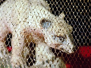 "Polarbear behind the glitter Craft Mesh Fence   ""Macro Mondays�"